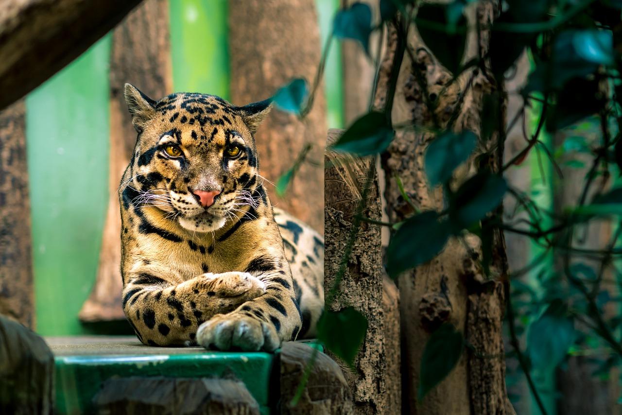 Thailand's Wildlife