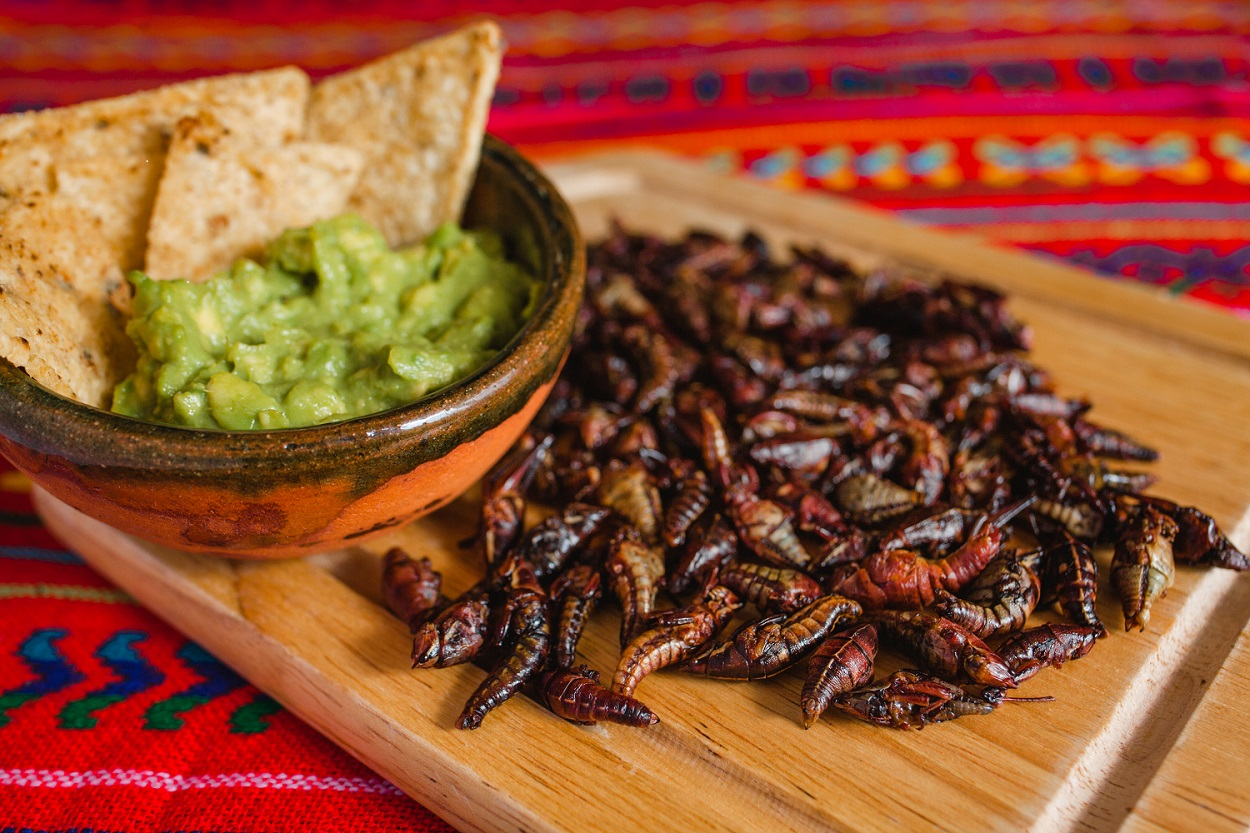 What are chapulines