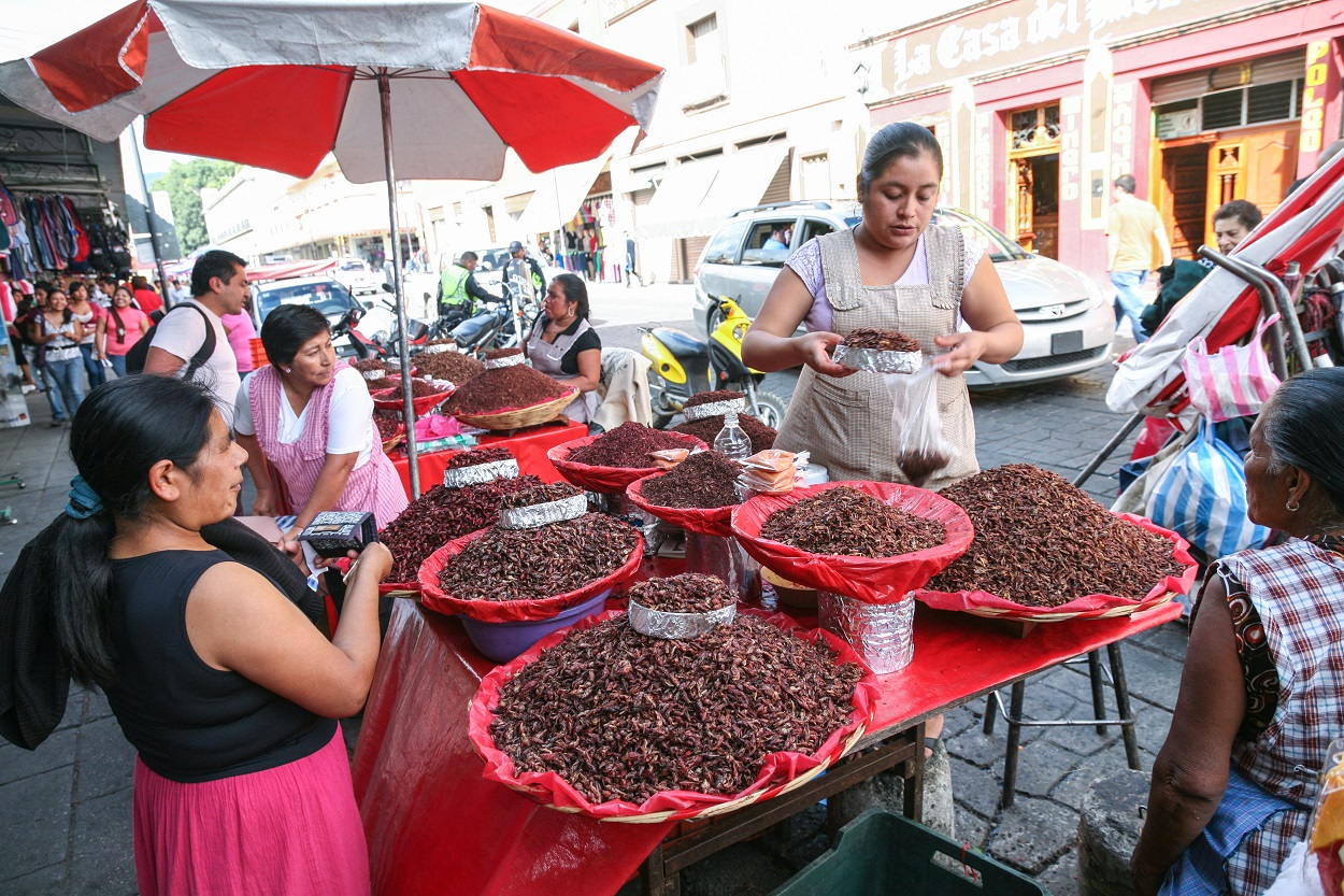 Chapulines grasshoppers